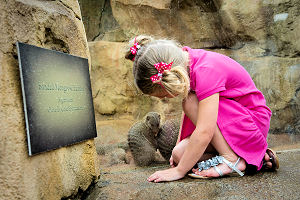 Girl Viewing Mongooses