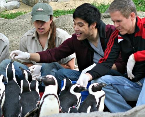 Penguin VIP Experience