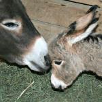 Naomi and foal 150x150
