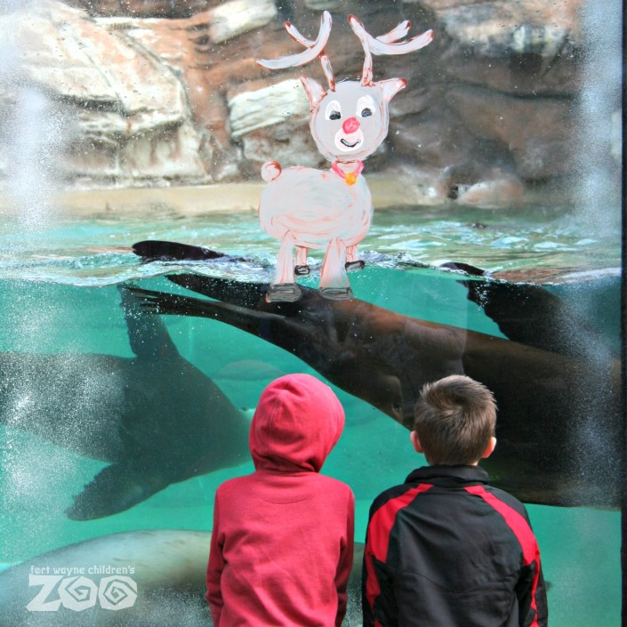 winter_break_zoo
