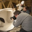 Joel Sartore photographs a black stork