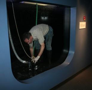 fort wayne children s zoo zookeeper cleaning jellyfish tank