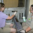 During a training session with Fort Wayne vet tech Jen Diehl and zoo keeper Angie Selzer, Tara presents her arm for a practice blood draw.