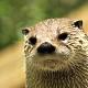 otter fort wayne zoo