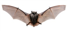 zoo bat attraction