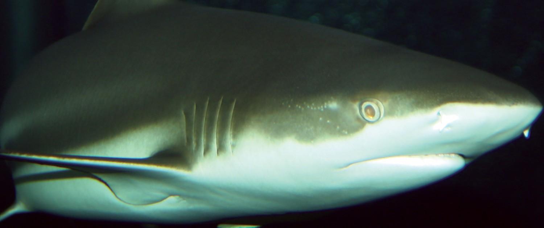 Fort Wayne Children S Zoo Blacktip Reef Shark