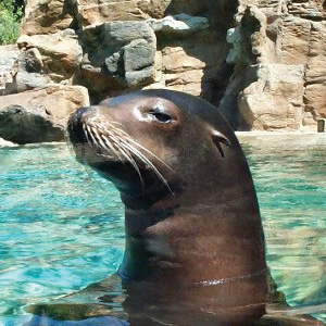 sea lion fort wayne zoo