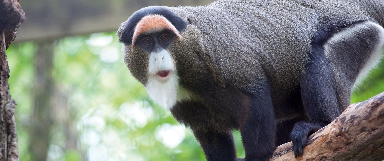 Bearded Monkey Name: Fort Wayne Children's Zoo