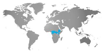 habmap-colobus-monkey