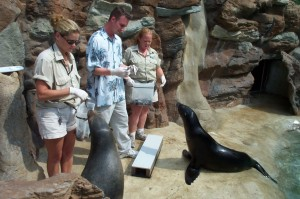 sea_lion_feeding
