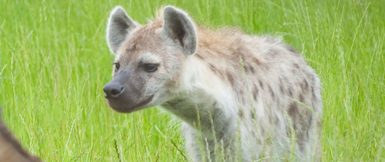 hyena|fort wayne children's zoo