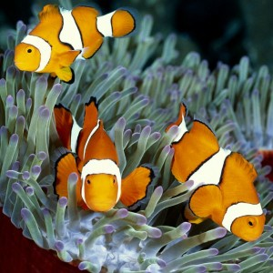 Clownfish are sure to be a guest favorite at The Reef.