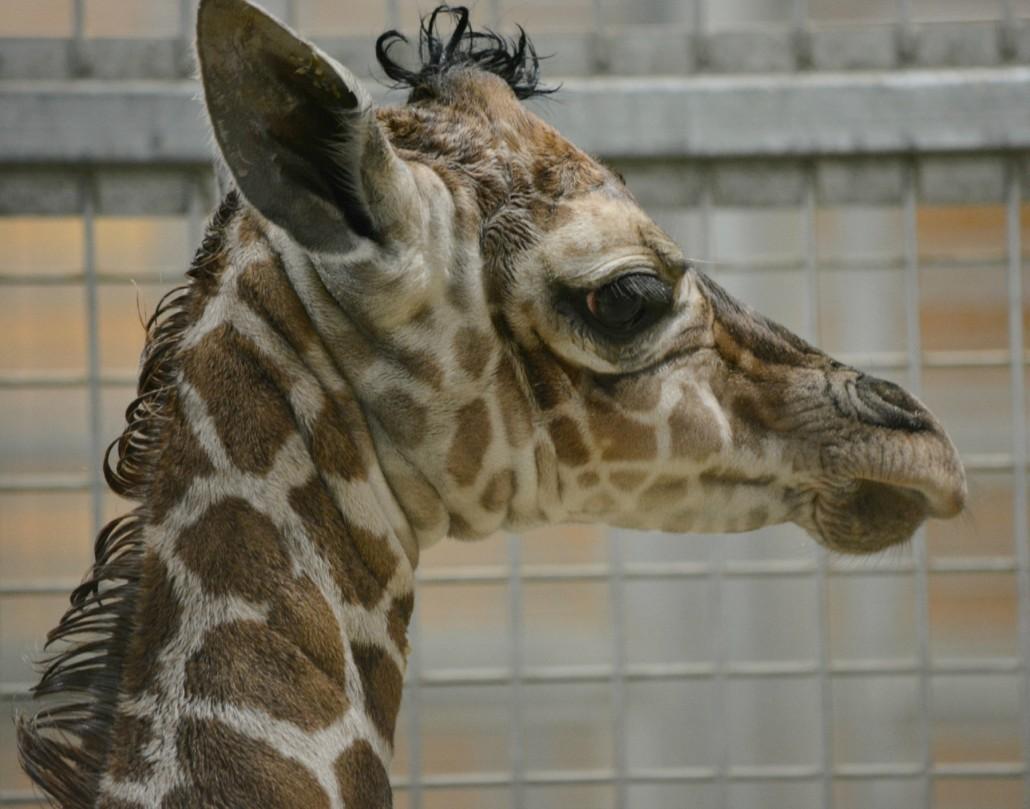 Fort Wayne Childrens Zoo  Baby Animals-5020