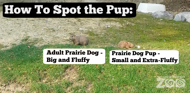 prairie dog pup fort wayne children's zoo