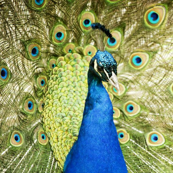 peacock square fort wayne zoo