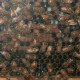 bees|fort wayne zoo