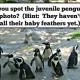 penguins fort wayne zoo