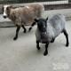 sheep|fort wayne zoo