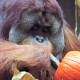 pumpkin|fort wayne zoo