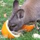 wallaby pumpkin