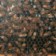 The Indiana Family Farm boasts its own beehive!