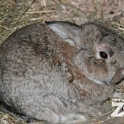 bunny rabbit zoo
