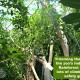 fort wayne zoo trees