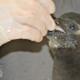 penguin chick fort wayne zoo