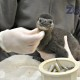 penguin chick fort wayne qoo