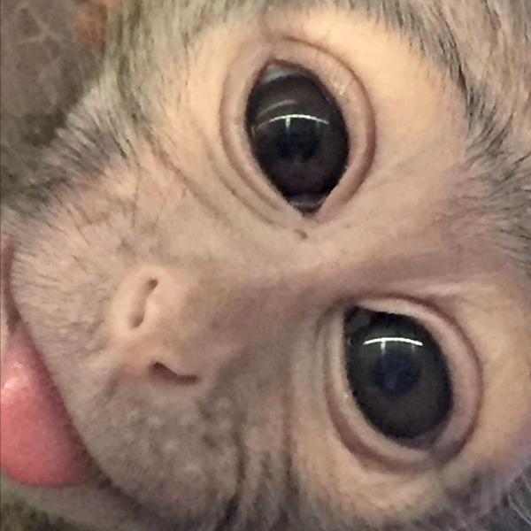 Fort Wayne Children S Zoo Cutest Baby Monkey Ever