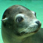 sea lion fort wayne