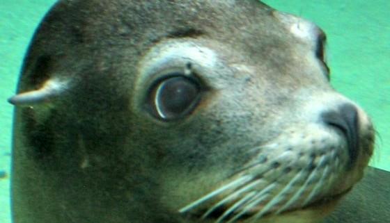 sea lion fort wayne