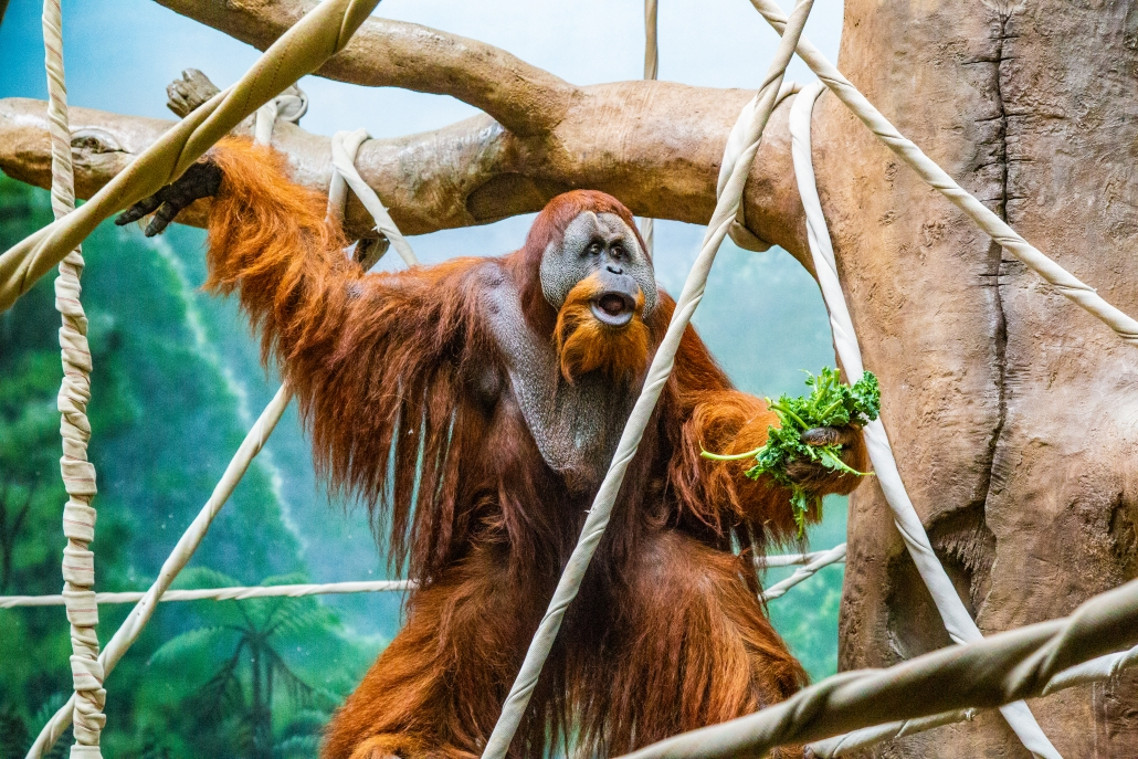 SPEND A DAY AT THE FORT WAYNE CHILDREN'S ZOO!