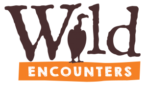 Wild Encounters African Bird 300x176