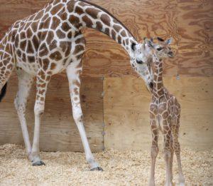 Mom Faye And Baby 9 5 20
