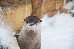 Otter Shots 1 20 (51) Edited