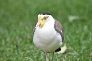 Aviary (1)