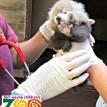 red panda cub fort wayne children's zoo