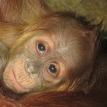 Baby Asmara 10 days 107pxl