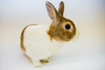 Domestic rabbit Fort Wayne Children's Zoo