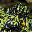 toads fort wayne zoo