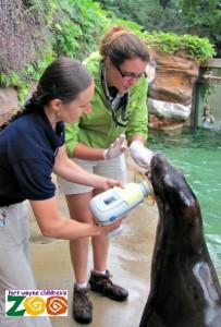 dental exam sea lion
