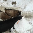 zoo animal enrichment snow