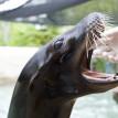 sea lion dentist zoo