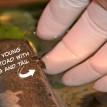 toad babies fort wayne zoo