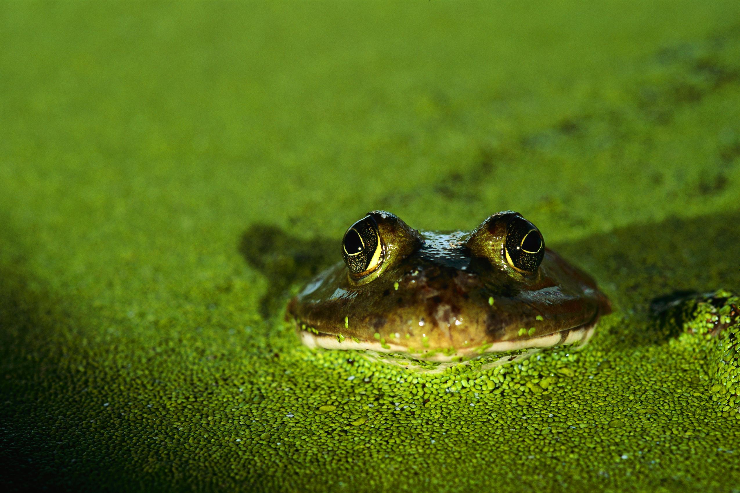 frog watch USA zoo program